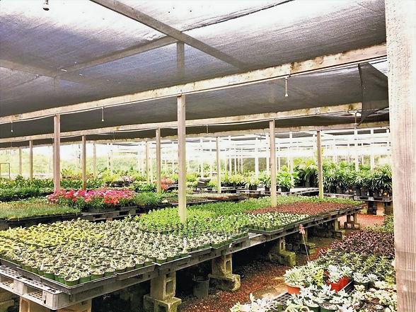 Greenhouse Alluvion Nursery Growing Indoor plans, landscape, succulents, flowering plants