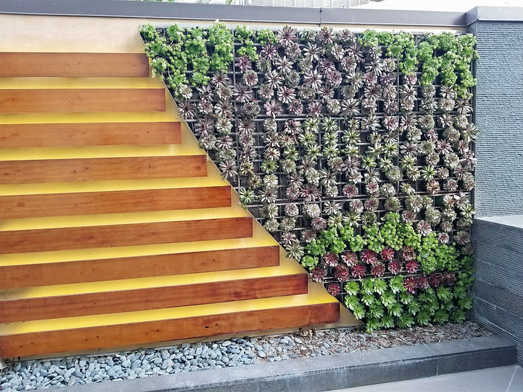 Succulent living wall hotel design installation