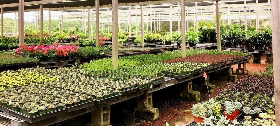 greenhouse%20photo_edited.jpg