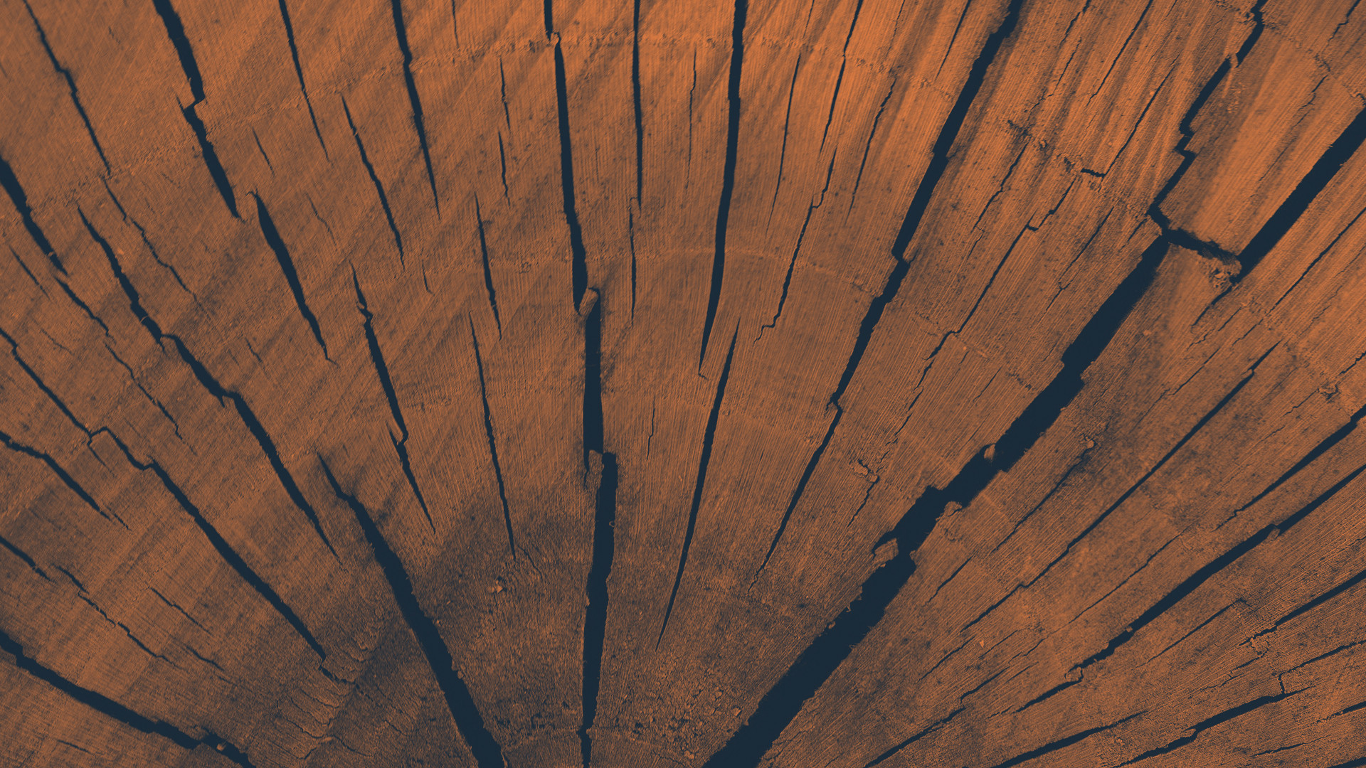 5-Elemente Organ Yoga | Element Holz