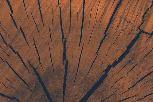 Spruce Tonewood 1003
