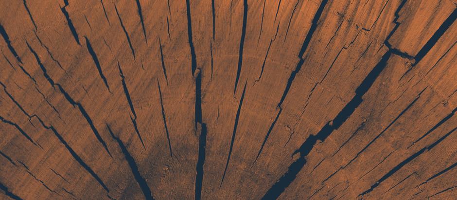 Die Leber im Element Holz gehört zum Frühling