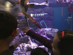Undersea world 3