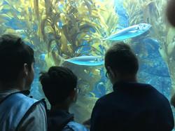 Undersea world 2