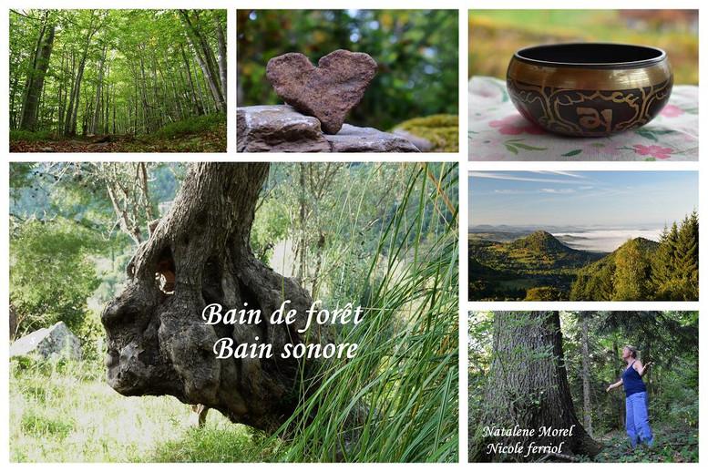 bain_de_forêt_sonore