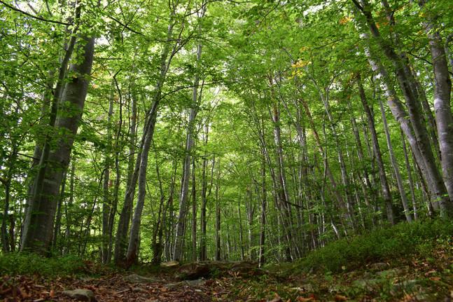 Forêt de Haute-Loire