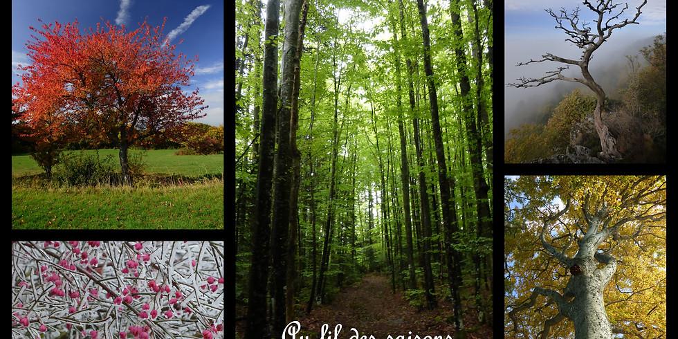 Bain de Forêt - Dates de l'été  2019