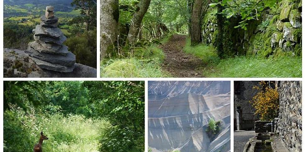 Se ressourcer en marchant sur les sentiers sauvages de Haute-Loire