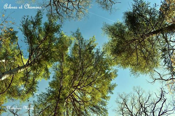 arbres au soleil.JPG