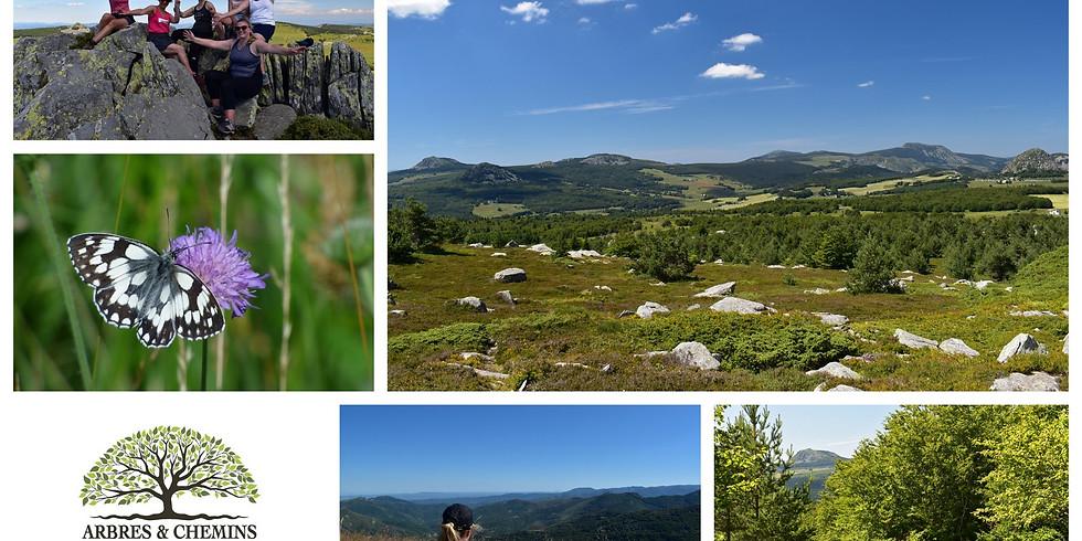 Ressourcement et Shinrin Yoku sur les chemins de Haute-Ardèche