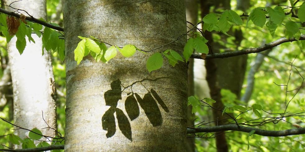 Shinrin Yoku : prendre un temps pour soi en forêt