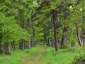 Marche consciente en allant en forêt