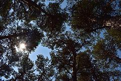 ciel d'arbre.JPG