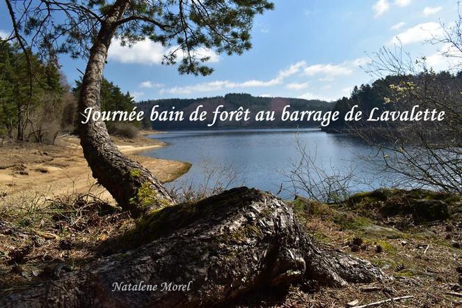 bain_de_forêt_43.JPG
