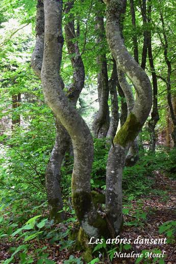 arbres qui dansent.JPG