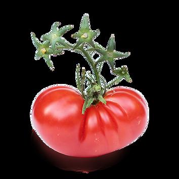Foodloopz tomatoe 2 low.png