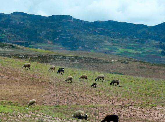 Cusco pasture on the way to Ollantaytambo, Peru
