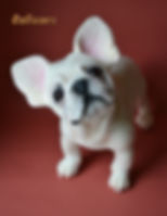 Needle Felted French Bulldog Dog Soft Sculpture by Collectable Teddy Bear Artist OzBears