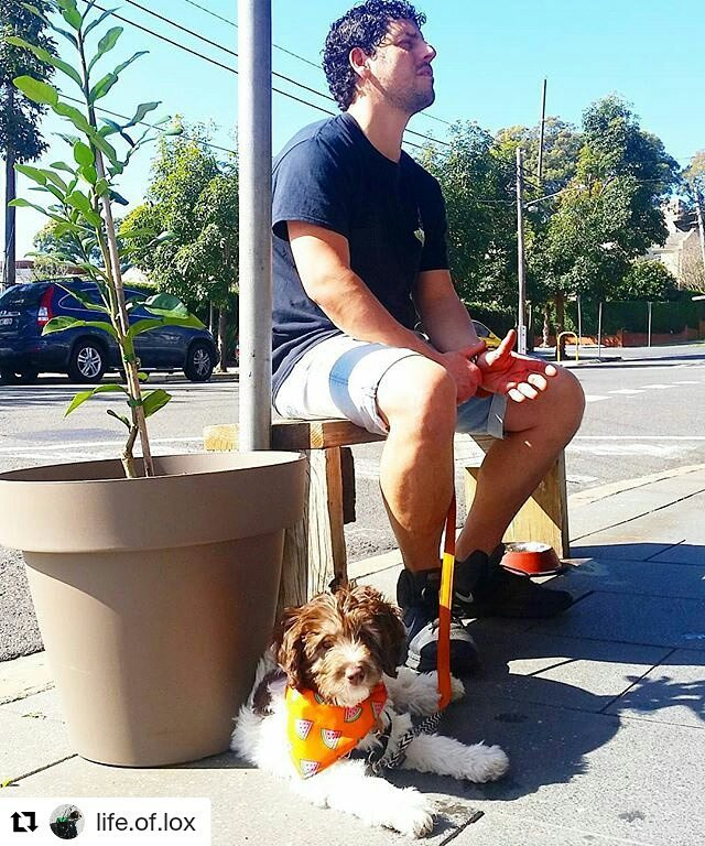 Visiting dad at work 🐶☕ #puppycinno #dogfriendlycafe #minigroodle _life.of