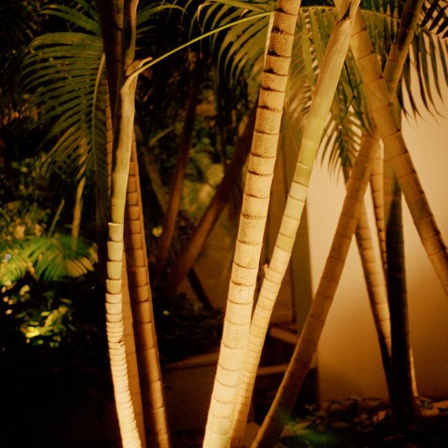 Palm Trees in a Vitrine, 2019