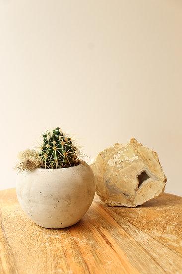 Cactus et boule