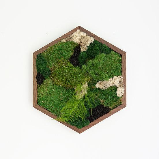Cadre végétal - Hexagone
