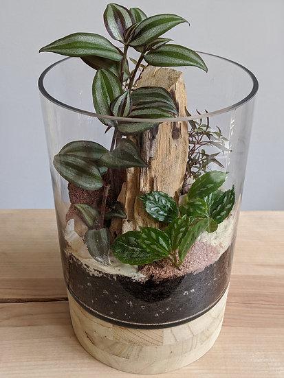 Terrarium base de bois