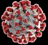 Coronavirus_3-removebg-preview.png