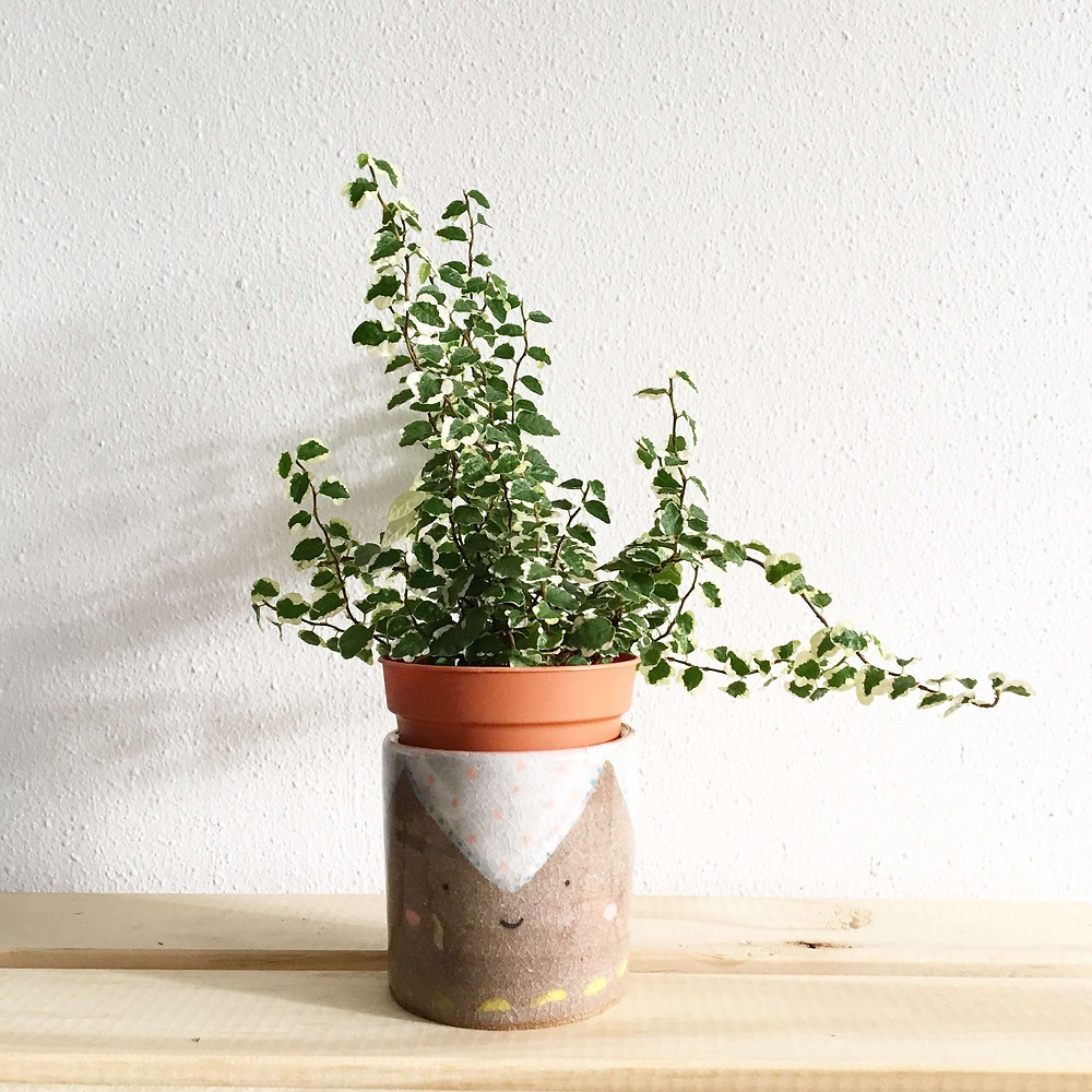 A house plant in a brown pot, placed in a home-made pot holder