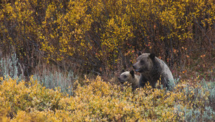Grand Teton National Park, WY, USA, 2016.