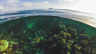 Turneffe Atoll, Belize, 2015.