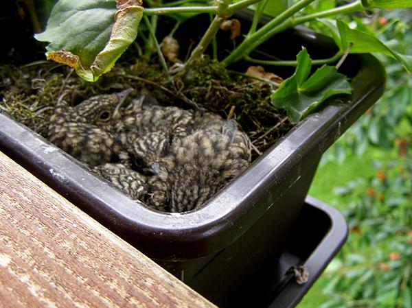 Vtáčie potomstvo