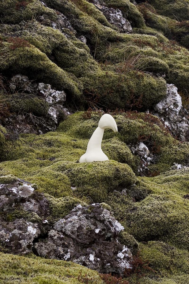 Icelandic Garden #5