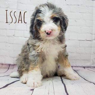 issac.jpg