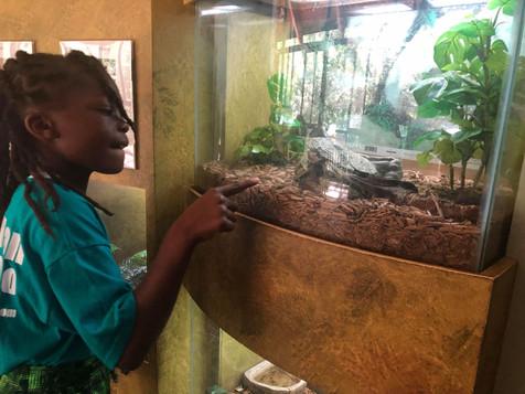 Reptile Week