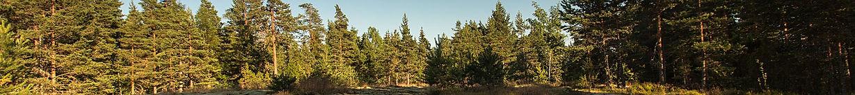 ForêtFinlande02.jpg