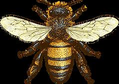 beeyond-bee-sustainabilty_edited.png