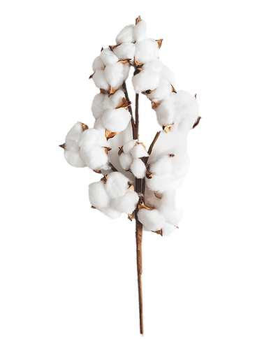 beeyond-cotton-organic.png