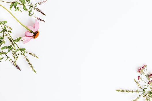 anxiocontol-szorongás-echinacea-háttér.j