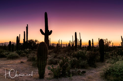 Désert Sonoran