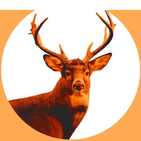 Semi-Guided Deer Hunts