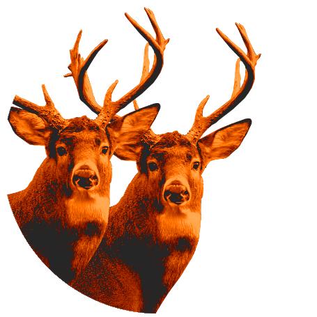 Fully Guided Deer Hunt