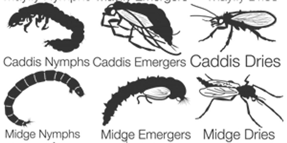 Class: Fly Fishing Entomology