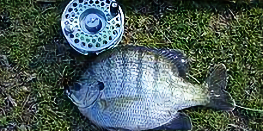 Fishout: Clear Lake Crappie Exploration