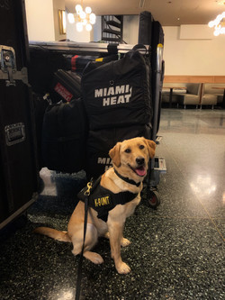 K9 Winnie doing a luggage sweep for the Miami Heat