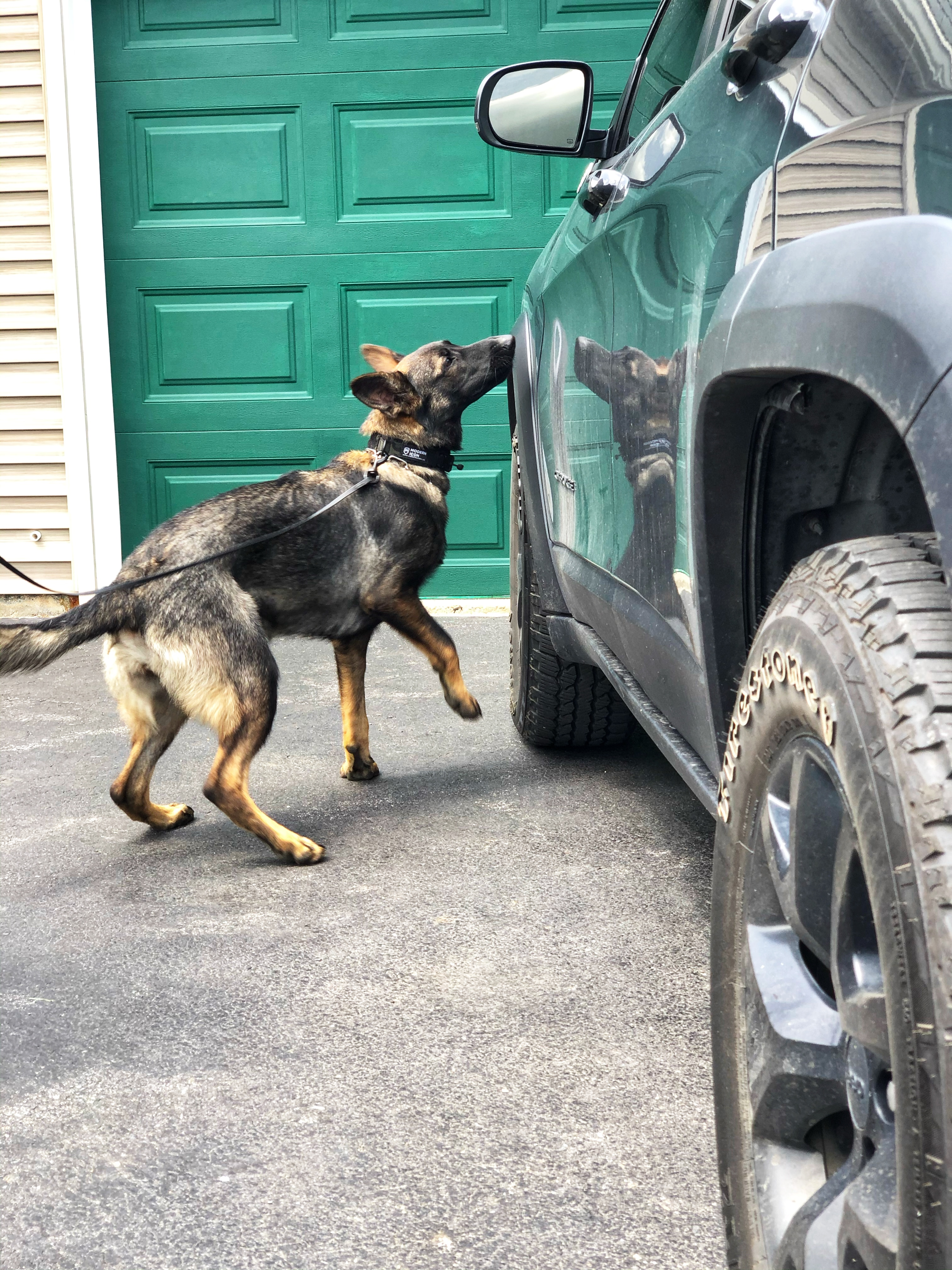 K9 Yara searching a vehicle for drugs.