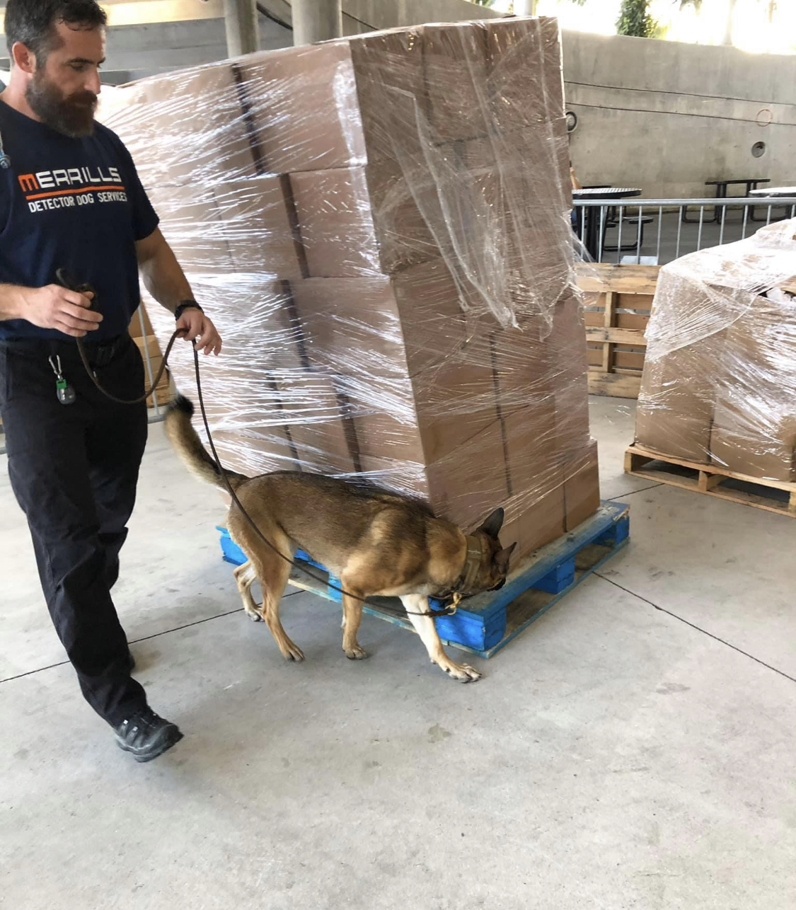 K9 Abbie searching cargo pallets.