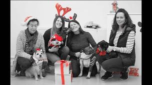 Doggy Christmas party! #paws4thought #doggydaycare #dogwalking #northwood #hillingdon 🐶🐾