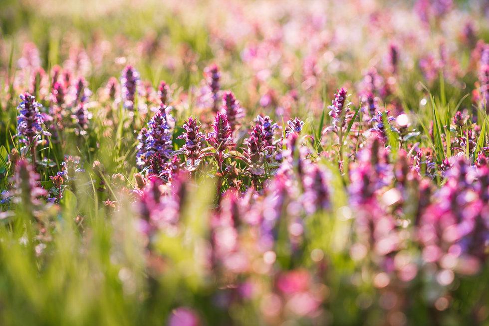 Blumen_im_Garten_fuer_Bienen_Fruehling.j