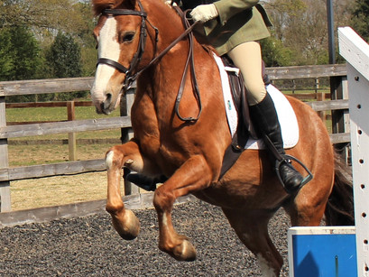 Fun Clear Round Show Jumping